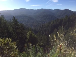 redwoods for days