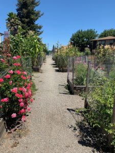 Flowers intermingle with vegetables at Friendship Park