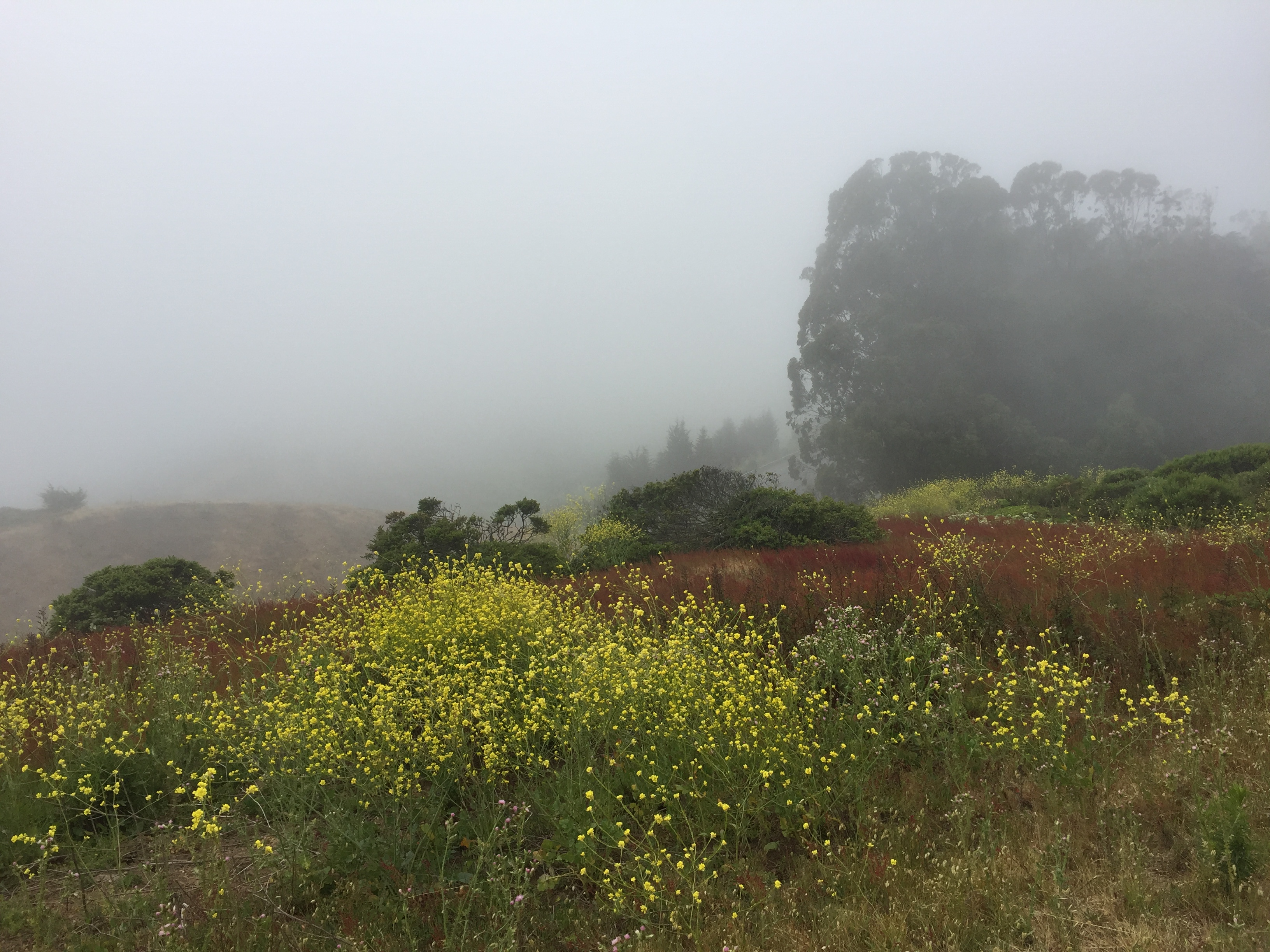 San Bruno Mountain Park Fog