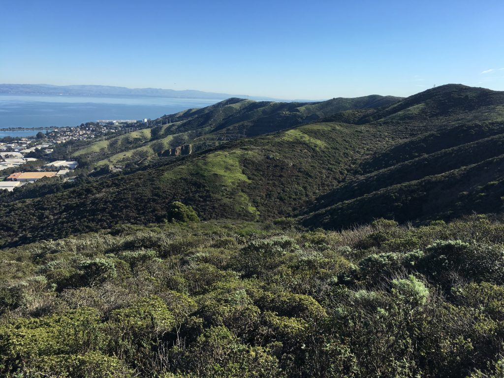 San Bruno Mountain Hills Saved from Development
