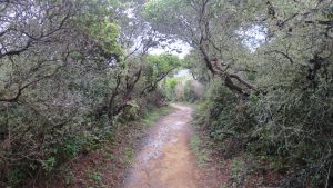Help maintain trails at San Pedro Valley Park!